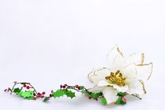 Poinsettia with holly christmas card. White poinsettia with holly on white background with space for writing stock image