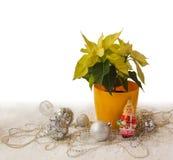 Poinsettia jaune à la veille des vacances d'hiver et de x28 ; produits de mA photo libre de droits