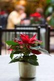 Poinsettia-Kaffee Lizenzfreie Stockbilder