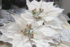 Poinsettia la planta de la Navidad Fotografía de archivo
