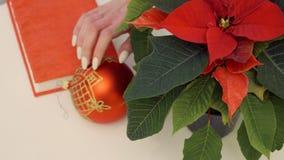 Poinsettia mit Weihnachtsspielzeug am Tisch stock video