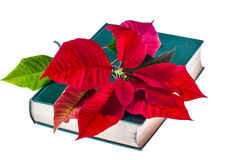 Poinsettia op boek royalty-vrije stock foto's