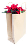 Poinsettia in paper bag . royalty free stock image