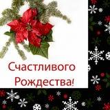 Poinsettia rode bloem met spar en sneeuw op witte achtergrond Groetenkerstkaart prentbriefkaar christmastime Rode Wit en royalty-vrije stock afbeelding
