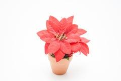 Poinsettia rojo en pote de arcilla Fotos de archivo