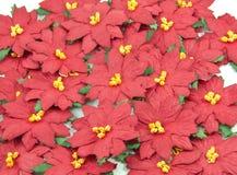 Poinsettia rouge. Fond de fleur de Noël Photographie stock libre de droits