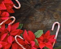 Poinsettia's and candy canes Stock Image
