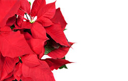 Poinsettia stationery Royalty Free Stock Photo