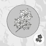 Poinsettia tirée par la main Image libre de droits