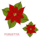 Poinsettia tirée par la main Images libres de droits