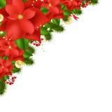 Poinsettia vermelho Fotografia de Stock Royalty Free