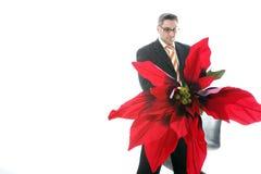 Poinsettia voor u Stock Fotografie