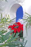 Poinsettia in window Royalty Free Stock Photo