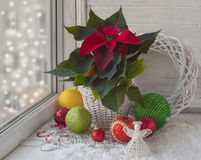 Poinsettia  in the window on the eve of Advent Stock Image