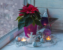 Poinsettia  in the window on the eve of Christmasmass producti Royalty Free Stock Photography