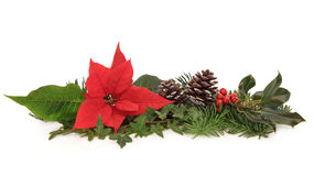 Poinsettia and Winter Fauna. Christmas decoration of pointsettia flower, holly, ivy, pine cones and spruce fir leaf sprig over white background Stock Image
