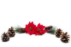 Poinsettia With Pine Cone On Stock Photos