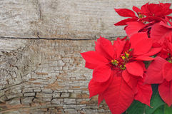 Poinsettia on wooden background Royalty Free Stock Photo