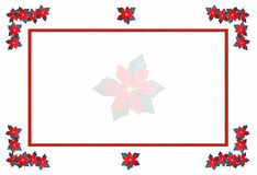 Poinsettia xmas frame. Illustration of a background frame featuring poinsettias for the christmas holiday The images are arranged on a white background for easy stock illustration