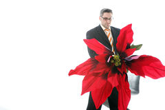 Poinsettia For You Stock Photography