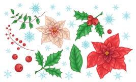 Poinsettiabloemen en Kerstmis Bloemenelementen Vector stock fotografie
