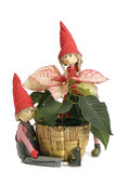 poinsettias λουλουδιών Χριστου& Στοκ φωτογραφία με δικαίωμα ελεύθερης χρήσης