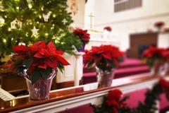 Poinsettias церков стоковые фотографии rf