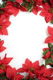 Poinsettias background over white stock photos