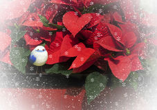 Poinsettias Christmas Bird Stock Image
