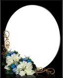 Poinsettias del blanco del marco de la Navidad Imagen de archivo libre de regalías