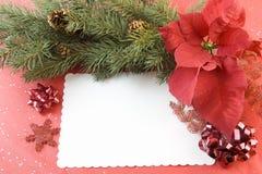 Poinsettiatannenzweig Weihnachtskarte Stockfotografie