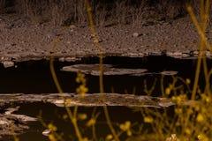 Point d'eau africain la nuit image stock
