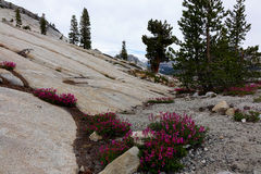 Point d'Olmsted - Yosemite Photographie stock libre de droits