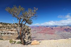 Point de Grand Canyon Maricopa Photo stock