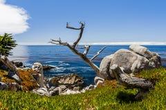 Point de Pescadero à la commande de 17 milles dans Big Sur la Californie Photographie stock libre de droits