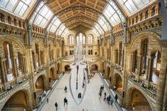 Point de repère de fossile de dinosaure de musée d'histoire naturelle photographie stock libre de droits