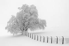 Point de vue blanc Photo libre de droits