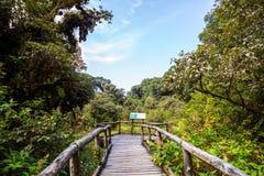 Point de vue dans la forêt tropicale, au nord de la Thaïlande Photographie stock