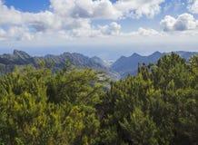 Point de vue dans les crêtes pointues de montagne d'anaga avec le buisson vert de cyprès Photographie stock
