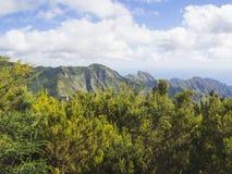 Point de vue dans les crêtes pointues de montagne d'anaga avec le buisson vert de cyprès Photo libre de droits