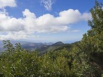 Point de vue dans les crêtes pointues de montagne d'anaga avec le buisson vert de cyprès Image libre de droits
