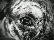 Point de vue de chien Image libre de droits