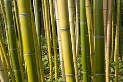 Point de vue en bambou 2 de forêt Images stock