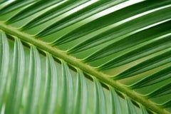 Point de vue en feuille de palmier Photographie stock libre de droits