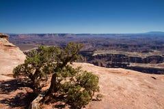 Point de vue grand, Canyonlands Photo stock
