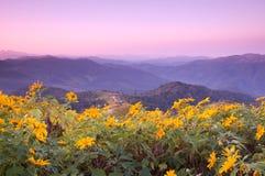 Point de vue sur la montagne le matin Images libres de droits