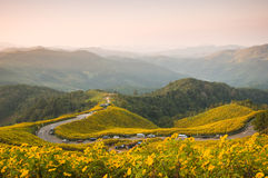 Point de vue sur la montagne le matin Photo libre de droits