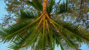 Point de vue tiré - la personne s'étendant sur une plage tropicale recherche sur un palmier clips vidéos