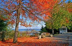 Point Defiance Park in Tacoma WA with red and orange leaves.  royalty free stock image