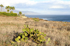 Point Dume Stock Photography